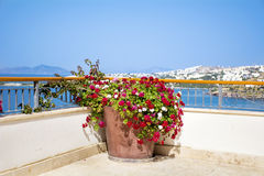 Clay pot with geranium blooming flowers on a terrace with sea view Royalty Free Stock Images