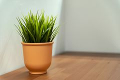 Clay pot with greens royalty free stock photos
