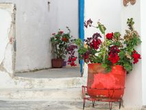 A clay pot with some red flowers on front of a traditional white. House in Astypalaia island Royalty Free Stock Images