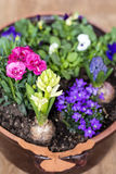 Clay pot with spring flowers on a wooden background Royalty Free Stock Images