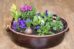 Clay pot with spring flowers on a wooden background Stock Image