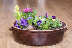 Clay pot with spring flowers on a wooden background Royalty Free Stock Photography