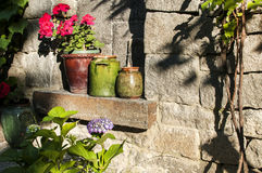 Clay pots with flowers on stonewall Royalty Free Stock Photo