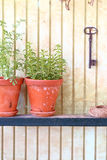 Clay pots with fresh herbs Stock Image