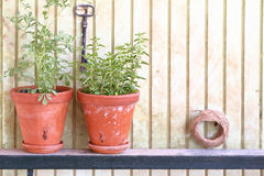 Clay pots with fresh herbs Stock Images