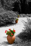 Clay pots with red flowers in the garden Royalty Free Stock Image