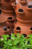 Clay pots and strawberry plants Royalty Free Stock Photo