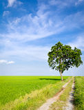 Clay road in paddy field Royalty Free Stock Photo