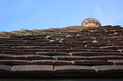 Clay roof tiles. Royalty Free Stock Images
