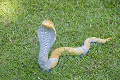 A clay snake crawling in the grass Stock Photo