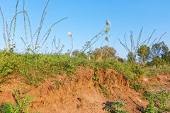 Clay soil covered with herbs Royalty Free Stock Images
