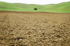 Clay soil field with green background in Tuscany Royalty Free Stock Images