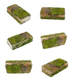 Clay tile overgrown with moss Stock Image