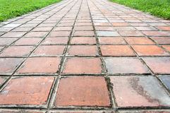 Clay Tiles Walkway and grass Stock Photo