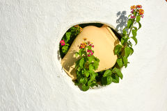 Clay water pot wall decoration with flower in garden wall Stock Image