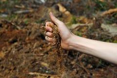 cleacutting的森林 库存图片