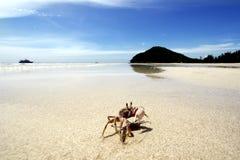Clean beach Royalty Free Stock Photos