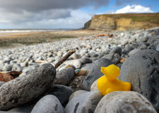 Clean Beach. Rubber duck on the coastline Royalty Free Stock Photo