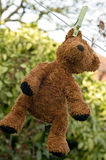 Clean bear. Toffee the bear has been washed and is hanging out to dry royalty free stock photos