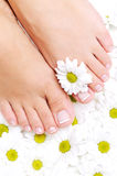 Clean and beautiful woman's feet Royalty Free Stock Image