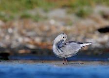 Clean bird. Istanbuk türkiye büyükçekmece Stock Photography