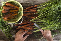Clean a bunch of carrots Stock Photos