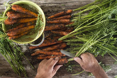 Clean a bunch of carrots Stock Images