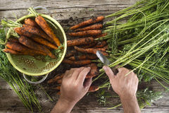 Clean a bunch of carrots Stock Photo