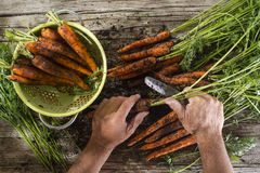 Clean a bunch of carrots Royalty Free Stock Images