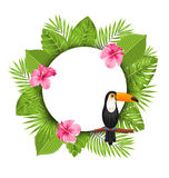 Clean Card with Pink Roses Mallow, Toucan Bird Royalty Free Stock Photography