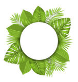 Clean Card with Text Space and Green Tropical Leaves Royalty Free Stock Photos