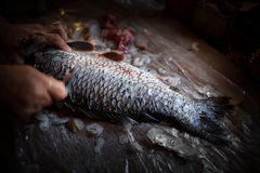 Clean Carp Scales Royalty Free Stock Photos