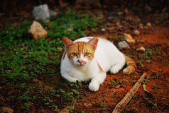Clean Cat. A photo taken on a well kept clean cat staring with caution at the camera royalty free stock photo