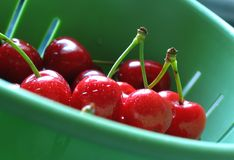 Clean cherries. Cherries after washing, June, Poland Royalty Free Stock Images