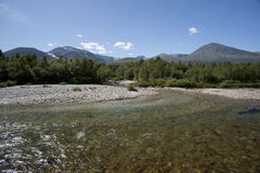 Clean and clear river in the forest, Rondane National Park Royalty Free Stock Images