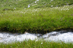 Clean and clear water stream in the mountains in a green valley Stock Image