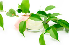 Clean cream facial. Close-up of a face cream with a green leaf Royalty Free Stock Photo