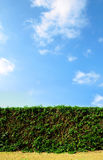 Clean cut hedge against a bright blue sky Royalty Free Stock Photos