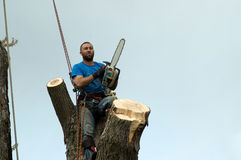 A clean cut tree man Royalty Free Stock Photography
