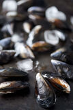Clean debearded raw mussels. Fresh raw mussels kept fresh with ice Royalty Free Stock Photos