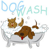 Clean Dogs. An image of a two clean dogs in a bathtub vector illustration