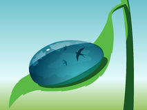 Clean drop on green leaf Stock Photography