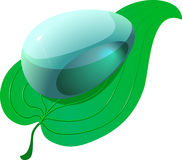 Clean drop on green leaf Royalty Free Stock Image