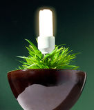 Clean energy. Metaphore with light bulb Royalty Free Stock Photos