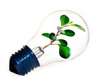 Clean energy. Fresh green plant inside a light bulb symbolizing clean energy Royalty Free Stock Image
