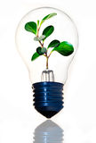 Clean energy. Bamboo inside a light bulb symbolizing clean energy Royalty Free Stock Images