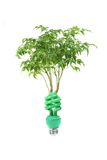 Clean Energy Concept With Lightbulb and Tree on Wh royalty free stock images