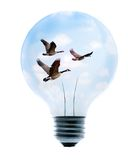 Clean Energy Light Bulb. Clean energy, a light bulb with a bright sky and birds Royalty Free Stock Image