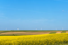 Clean energy in the spring. Rape flowers were yellowing the fields with wind farm in Poland Royalty Free Stock Image