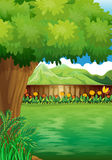 A clean fenced backyard with plants. Illustration of a clean fenced backyard with plants Royalty Free Stock Photography